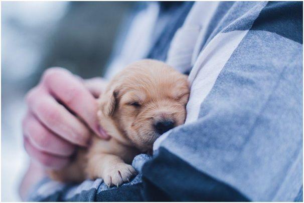 sưởi ấm chó